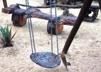 Meerkat adventure park