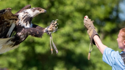 Birds of Prey - Handling