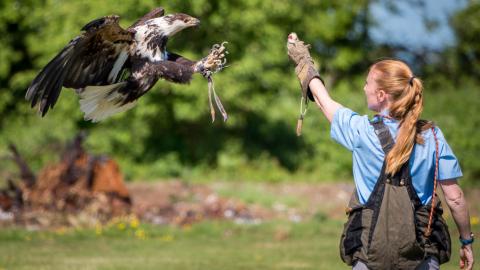Birds of Prey - Flying