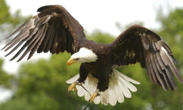 fly_birds_of_prey_link